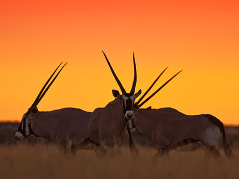 Oryx Namibia Etienne Oosthuizen