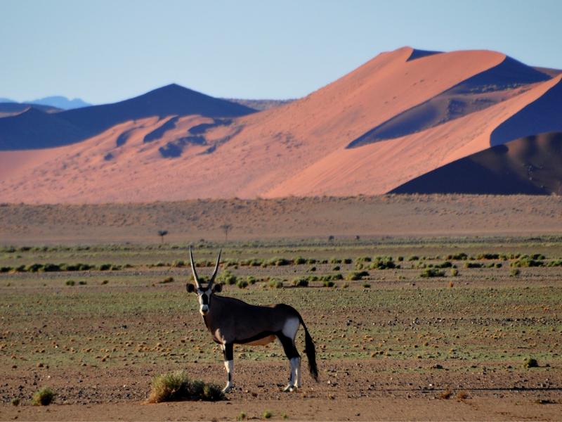 Namibia Oryx - Namibia Experience Gallery