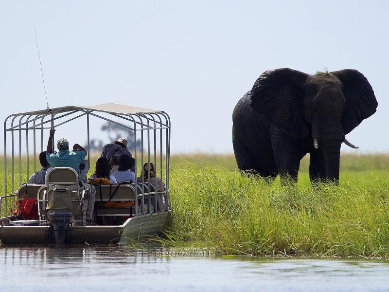 Okavango Elephant - Sunway Safaris - Botswana