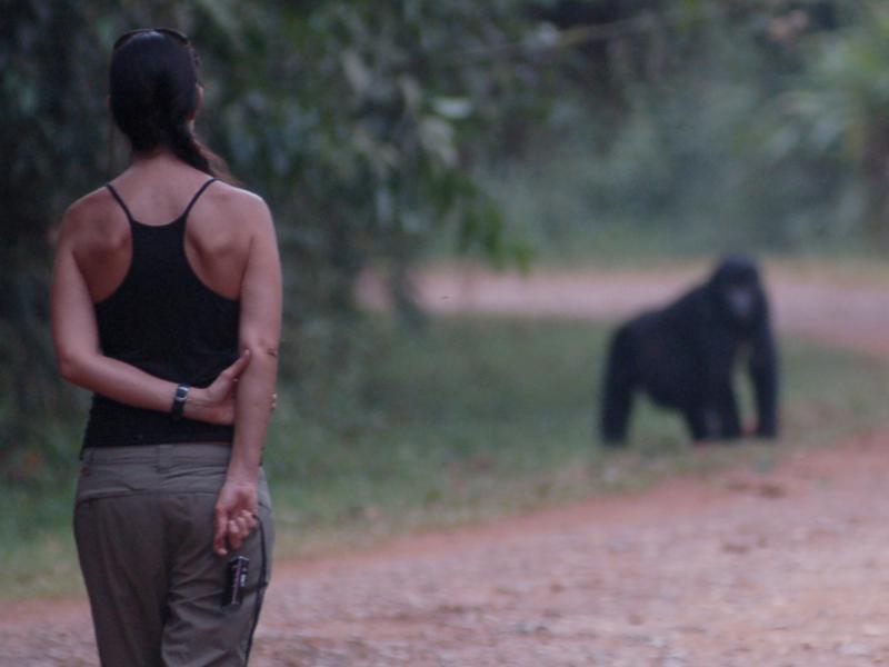uganda_wildlife_gorillas_bwindi_04
